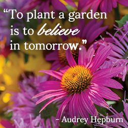 22 Best Images About Gardening Together On Pinterest Gardens Raised Beds And Cas