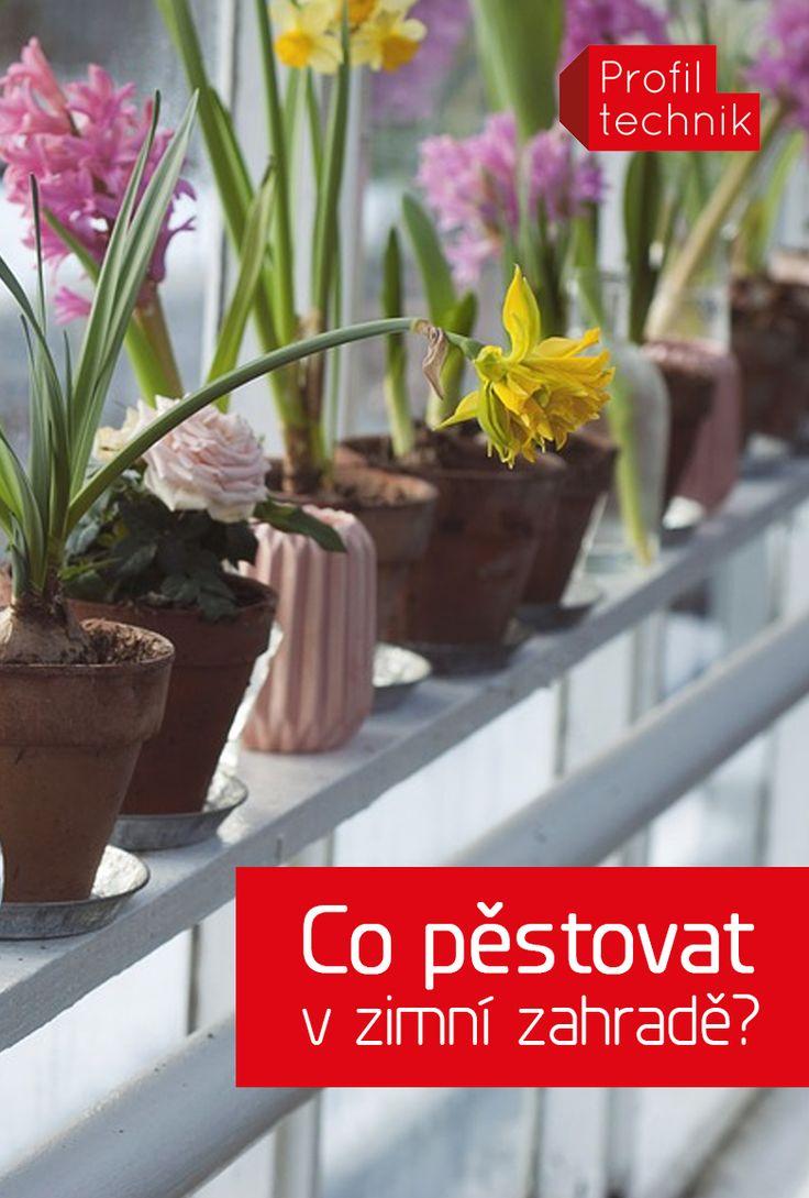 I přesto, že zimní zahrada není skleník, je skvělé v ní mít květiny. Bude se jim tam dařit, a navíc celému prostoru dodají na útulnosti. Vybírejte podle typu zimní zahrady, ale také podle světelných podmínek. Některým rostlinám samozřejmě vyhovuje i více typů zázemí. Tak jen do toho!