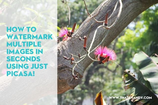 How to Watermark Multiple Images at Once Using Picasa. Super easy, use your own fonts and do it in just a few clicks!