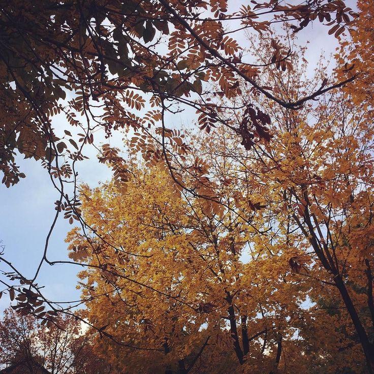 Jesień w Kato <3 #autumn #autumn #katowice
