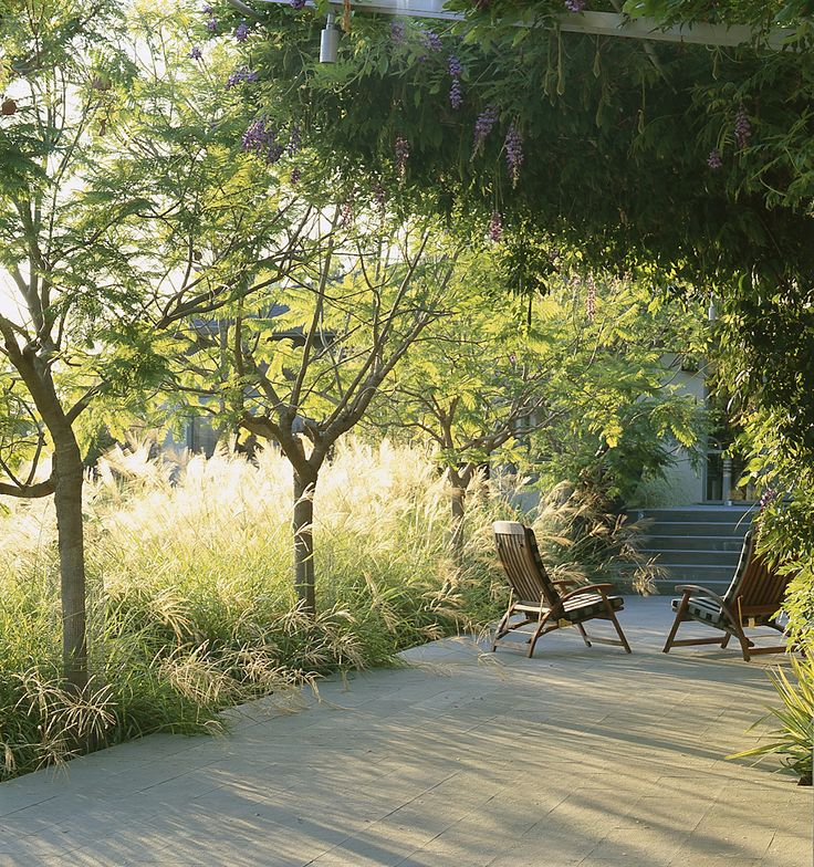 love the sunlight in the grasses - burt residence, san fransisco