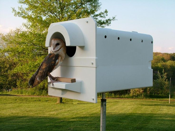 build owl boxes on your property for pest control and coolness.