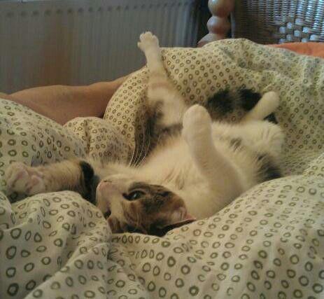 #Lazy #cat / beetje moe