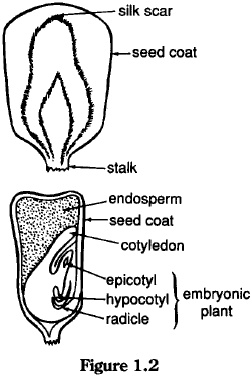 20 best Apologia Botany ~ Seeds Chapter 2 images on
