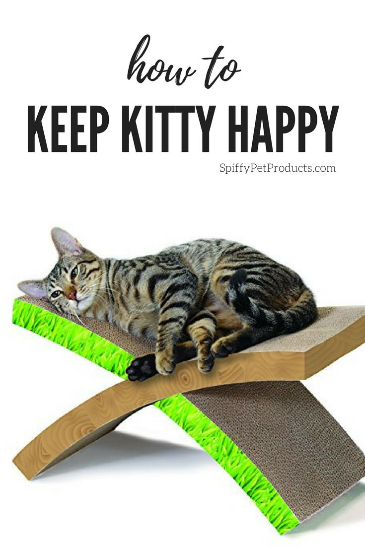 How to keep kitty happy & save your furniture! via SpiffyPetProducts.com