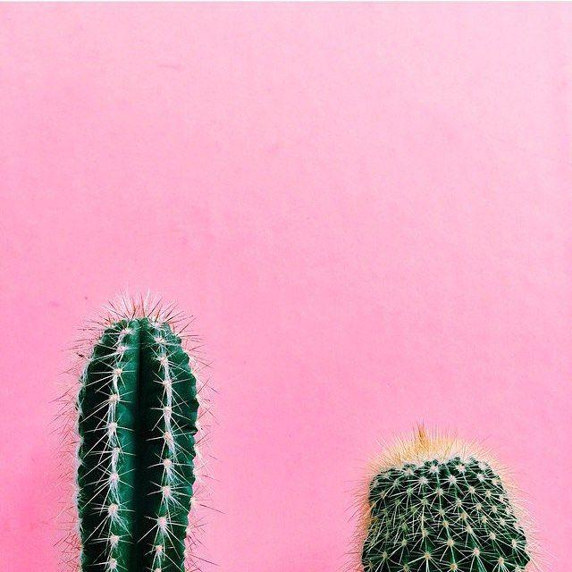 #plantsonpink by @mija_mija | ** Cactus & Succulents ...