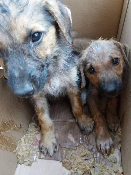 SOS! HORROR has no Name! Please SHARE! Noiazomai  -Animal rescue Thessaloniki-Greece :   SOS Η Φρίκη δεν έχει όνομα.Παρακαλούμαι προωθείσ...