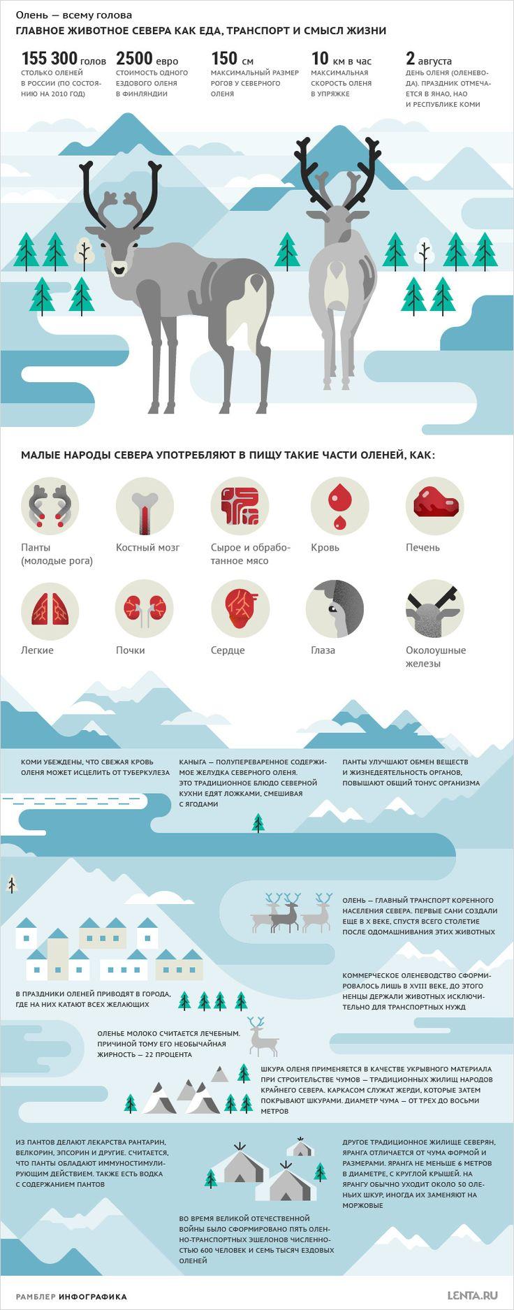 Главное животное Севера как еда, транспорт и смысл жизни