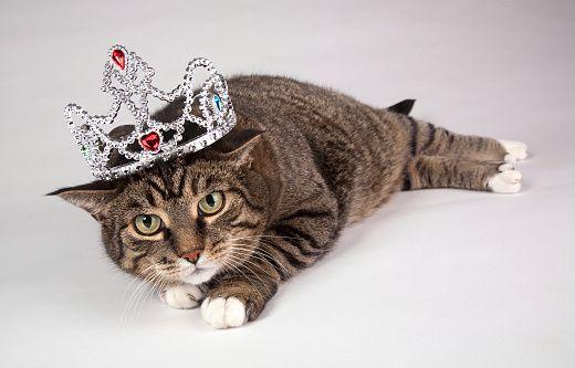 Портрет взрослых Полосатый кот с тиарой на голове