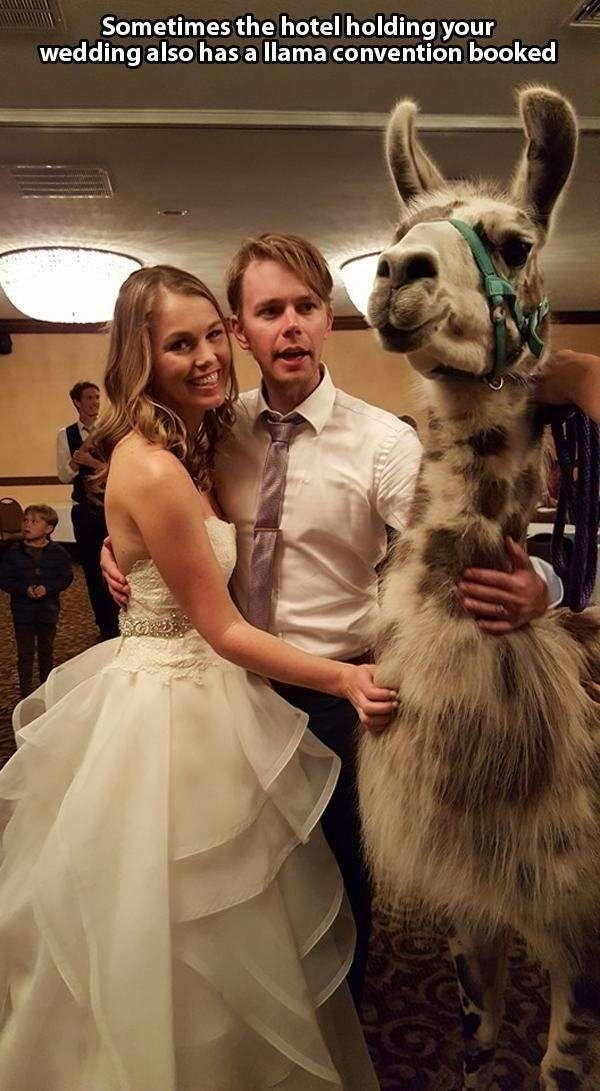 I would be so happy if this happened at my wedding...