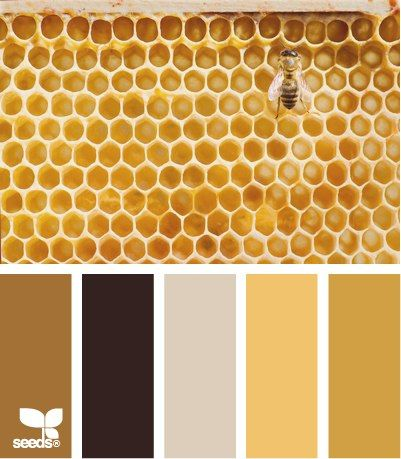 The honey gold color is another avenue you might want to look at.  The far right in the honeycomb pic.