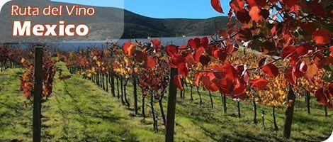 La ruta del vino Ensenada,Mexico. - Buscar con Google