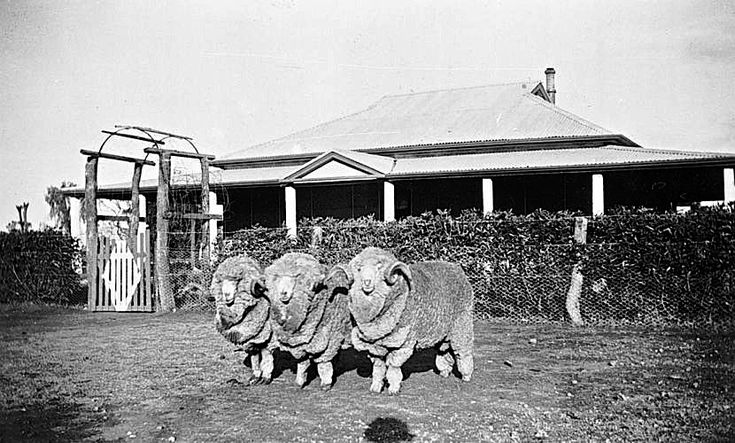 Three elegant gentlemen outside the homestead on Tyrrell Range farm, Chillingollah, Victoria, 1938, via The Biggest Family Album in Australia, Museums Victoria Collections (under CC License).