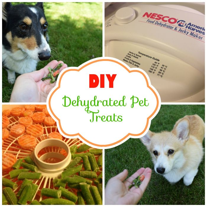 After spending a ridiculous amount on dehydrated green beans and dehydrated sweet potato dog treats, I purchased a a dehydrator to make my own healthy treats. For not very much money, I can make crunchy dehydrated green beans and carrots that my dogs adore. It didn't take long for my dehydrator to pay for itself …
