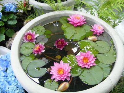Todas somos reinas: Proyecto mini mini estanque.