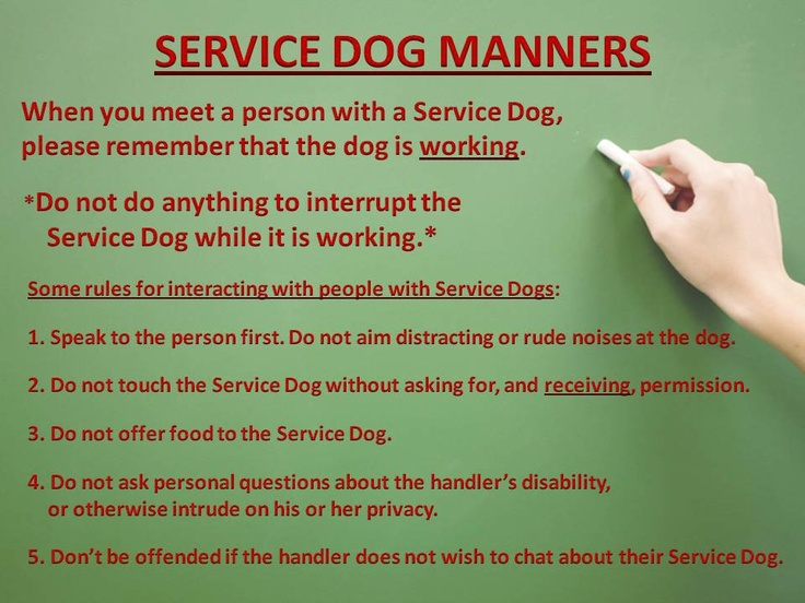 Manners expected when encountering a Service Dog (With