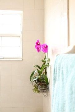 Add some life to your bathroom by planting lush tropicals in a shower caddy.