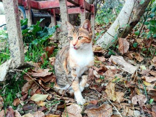 AUTUMN CAT  #autumn #cat