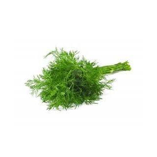 Cerca per sintomo o parte interessata al disturbo :: AFTE :: Aneto semi (Anethum graveolens L.) - Erboristeria Sauro - vendita online erbe officinali e preparati fitoterapici.Rimedi salutistici - Laboratorio d'Erbe Sauro - promozioni - sconti