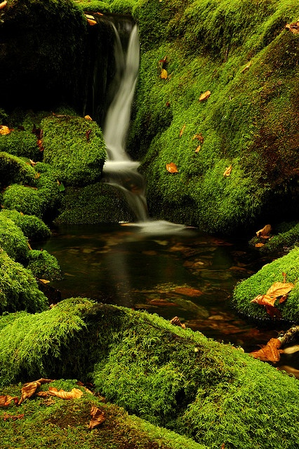 Moss and trickling stream in Fundy National Park, New Brunswick.....By marc_guitard
