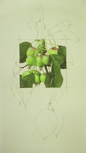 Apples Squared - S J Morris. Contour drawing with selected area in full color showing form and light and texture.