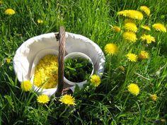 Salaattiin sopivia: poimulehti, apilan lehdet ja kukat, ahomansikka, pihatähtimö, jauhosavikka, koivun ja pihlajan silmut, piharatamo, siankärsämö, käenkaali, ketohanhikki