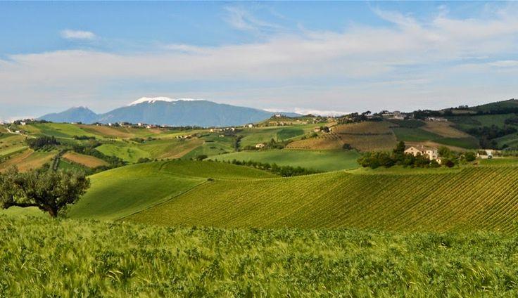 """PS Winery ha deciso di sperimentare, unendo la tradizione del Montepulciano d'Abruzzo e del Pecorino all'impiego di vitigni originali, come il Syrah e il Petit Verdot, fino al raro """"Incrocio Bruni 54"""" (per saperne di più: http://www.excantia.com/produttori/pswinery)."""
