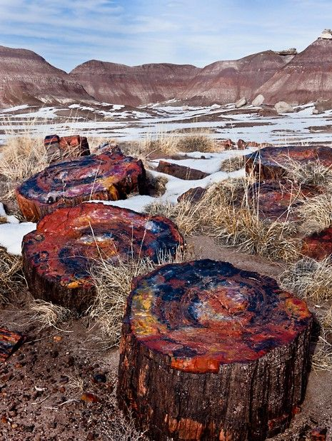 Petrified Wood - crystals of minerals replace wood, until it is a stone copy of the tree that once was...