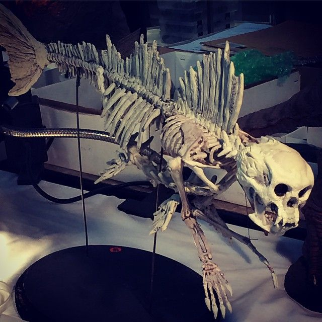 Fossilized Fiji mermaid #proof #fijimermaid #gemshow