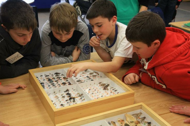 Curious? During the SMTP, Students have the opportunity to check out some of BIO's world-class specimen collection!   malaiseprogram.ca #EnvironmentalEducation  #SMTP #BIObus #Biodiversity