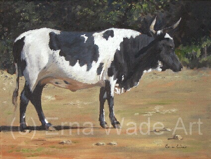 """Nguni 29  Oil on Stretched Canvas  400x300mm (16x12"""")  Price: $98  To buy, Contact me on my Facebook Page: ErnaWadeArt"""