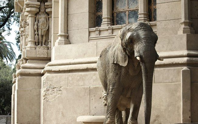 Zoológico de Buenos Aires tem futuro incerto