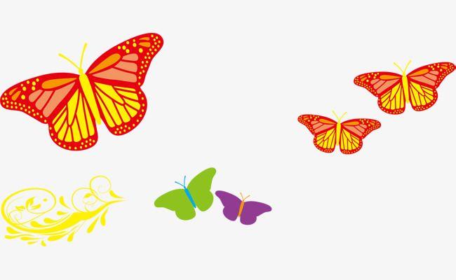 الفراشة الملونة Colorful Butterflies Butterfly Color