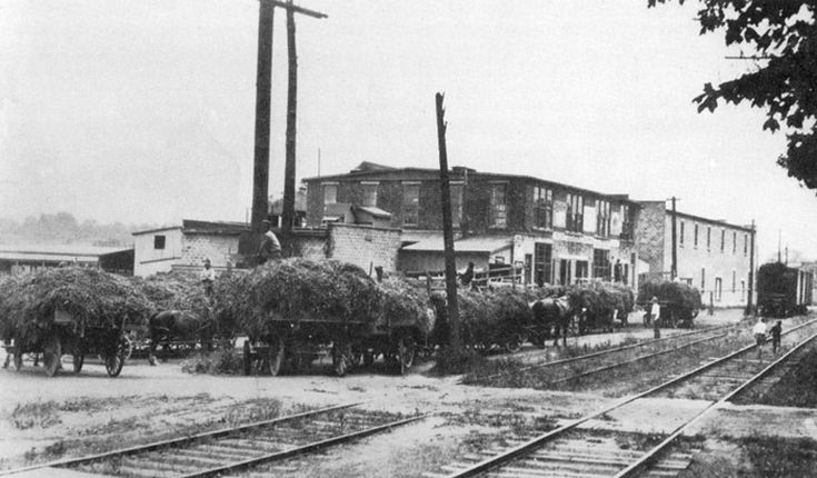 Horse drawn wagons loaded with pea vines waiting to be unloaded at the Port Dover Canning Co., which later became The Culverhouse Canning Co., circa 1925.