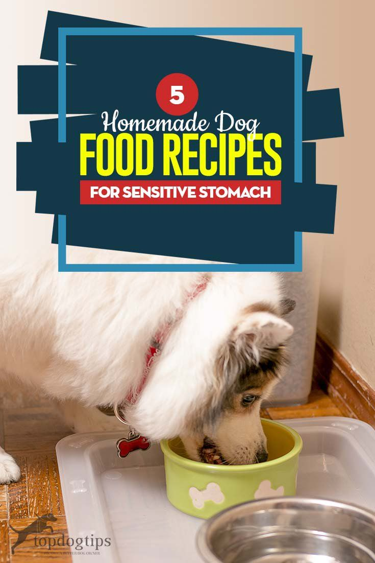 5 Great Recipes For Dogs With Sensitive Stomachs Dog Food