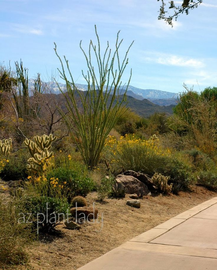 What Is a Sustainable Landscape? azplantlady.com