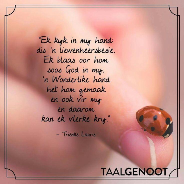 Ek kyk in my hand dis 'n liewenheersbesie ... | Trienke Laurie | Afrikaanse gedigte | Afrikaans is wonderlik | Taalgenoot