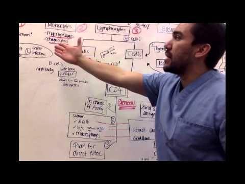 Immunology Nursing school - YouTube