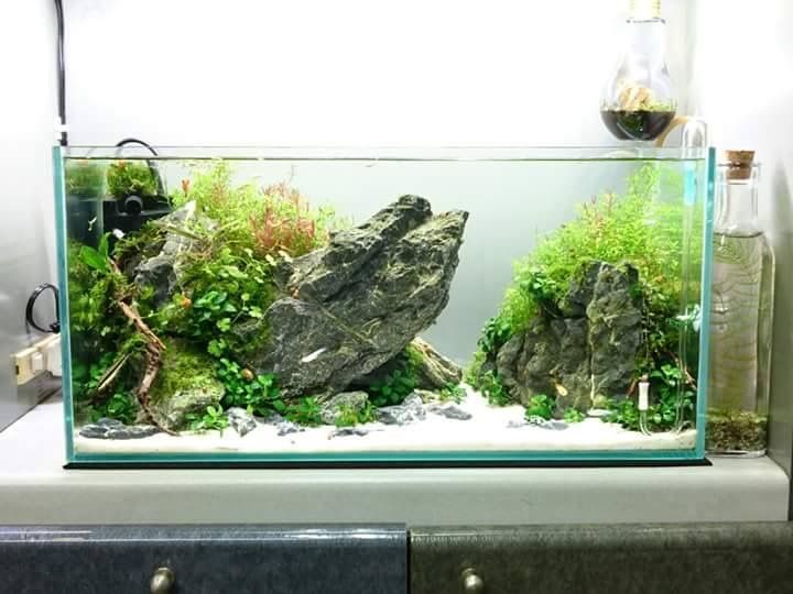 86 best acquari images on pinterest aquascaping zen for Decoration zen aquarium