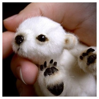 Small Cute Polar Bears | Polar Bear Pictures | Cute animal pictures and videos. Collection of ...