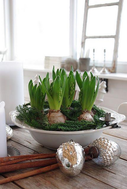 Hyacinter hör julen till!