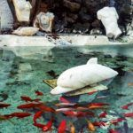 CINE MANTO: Ένας μυστικό καταφύγιο στην καρδιά της Χώρας της Μυκόνου