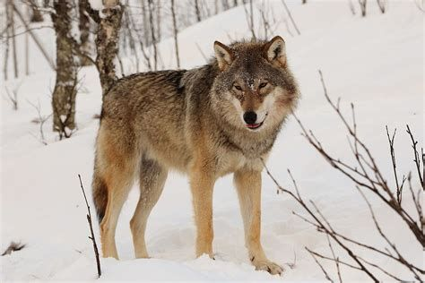 Save Wildlife From Destructive Riders!