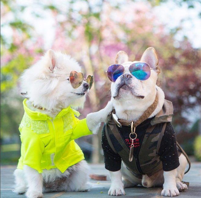 Conoce a Sebastián y a Luna, los #perritos que han #enamorado #Instagram
