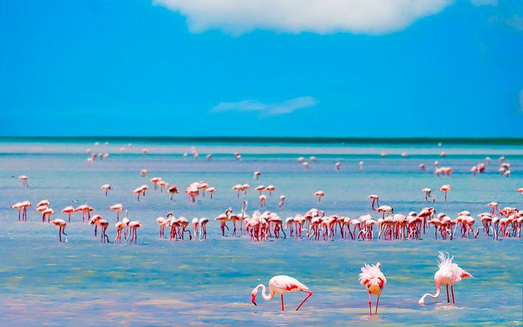 Flamingos versammeln sich an der Küste Sardiniens