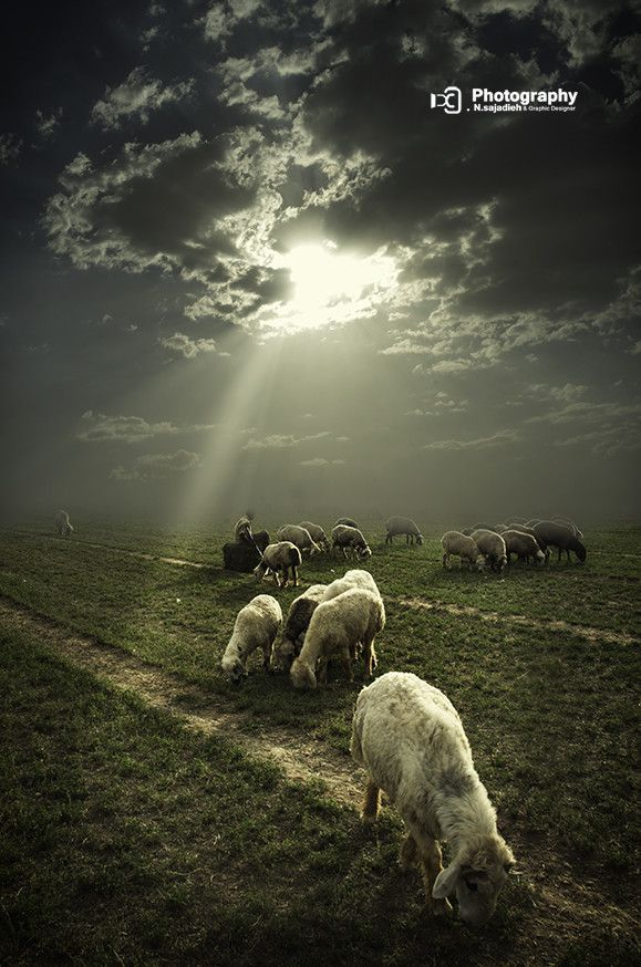 ~✿~Psalm 23  The LORD is my shepherd;