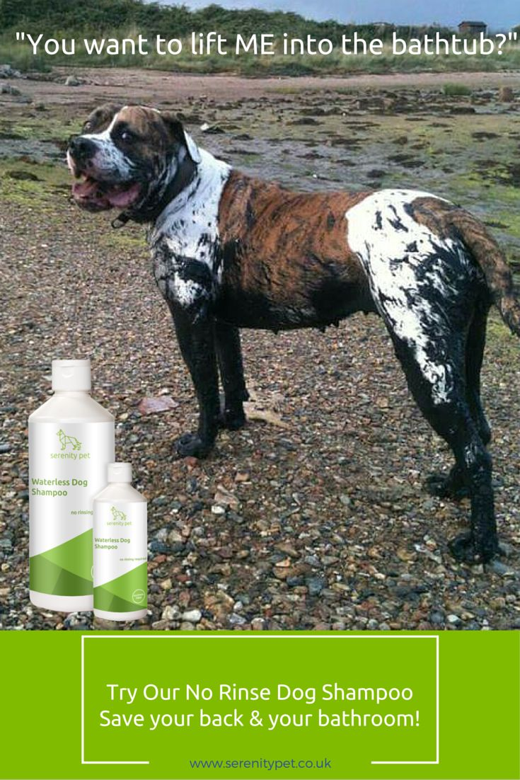 21 best no rinse dog shampoo images on pinterest dog shampoo dog manufacturers of ethical pet supplies including waterless dog shampoo no rinse horse shampoo cat deodorising spray cat dog grooming products solutioingenieria Image collections