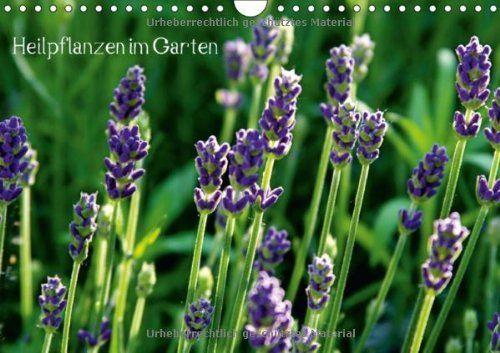 Heilpflanzen im Garten (Wandkalender 2013 DIN A4 quer) von Andrea Fettweis, http://www.amazon.de/dp/366003715X/ref=cm_sw_r_pi_dp_x-fvsb18TN0J3