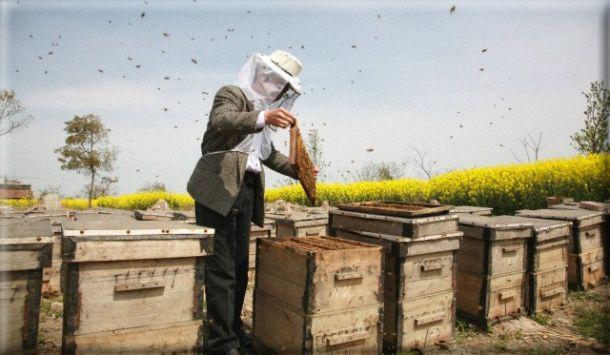 ..Το Σάββατο 10 Μαΐου, σε περιμένουμε στη μελισσογιορτή μας. http://www.foodmarket.gr/fm/greenpeace-%CF%83%CF%84%CE%B9%CF%82-10-%CE%BC%CE%B1%CE%90%CE%BF%CF%85-%CE%AD%CF%87%CE%BF%CF%85%CE%BC%CE%B5-%CE%BC%CE%B5%CE%BB%CE%B9%CF%83%CF%83%CE%BF%CE%B3%CE%B9%CE%BF%CF%81%CF%84%CE%AE/
