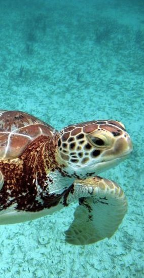 Swim with Sea Turtles in Akumal, Mexico
